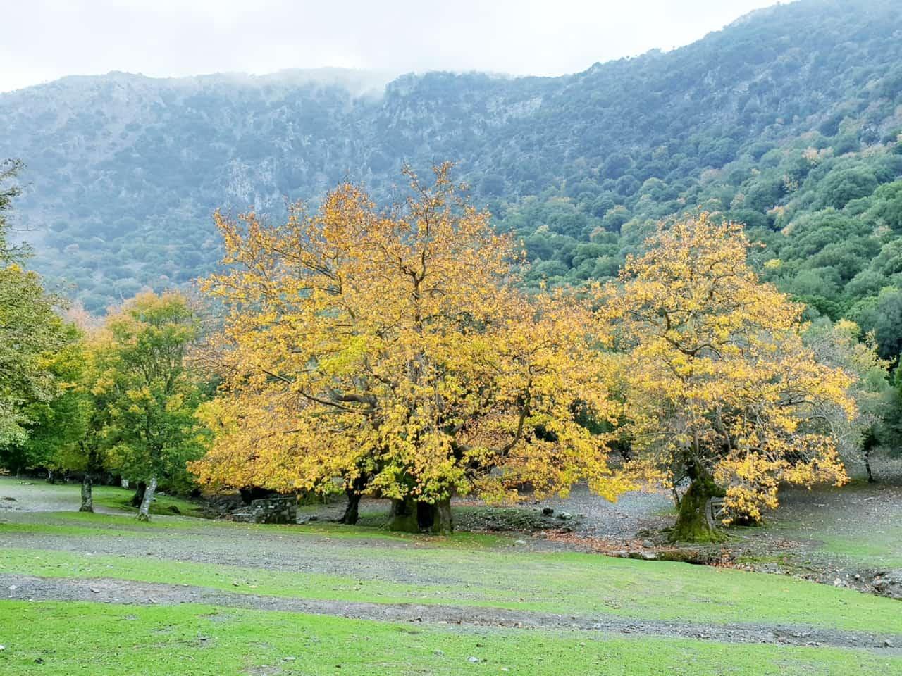 Winter In Crete - Rouvas Forest - Zaros Village