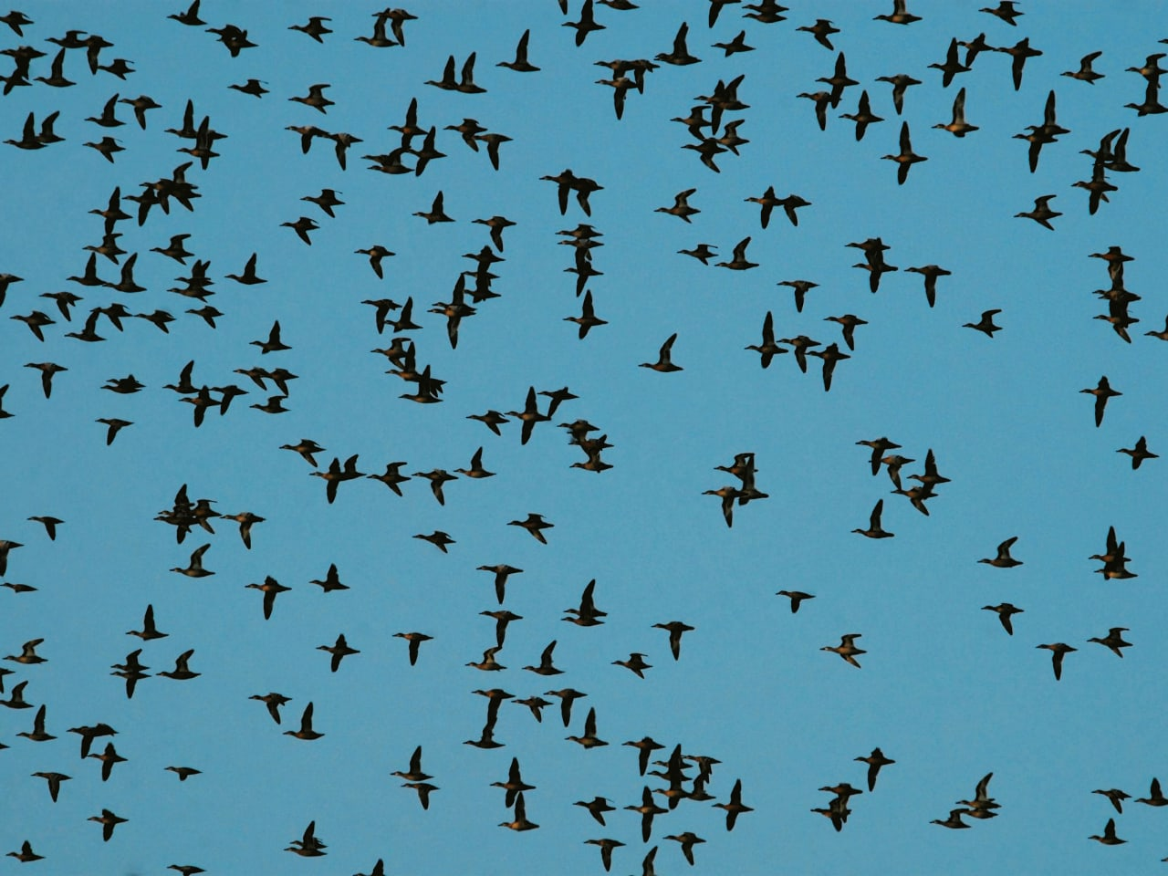 Fall Migration An Exciting Time For Birds in Crete