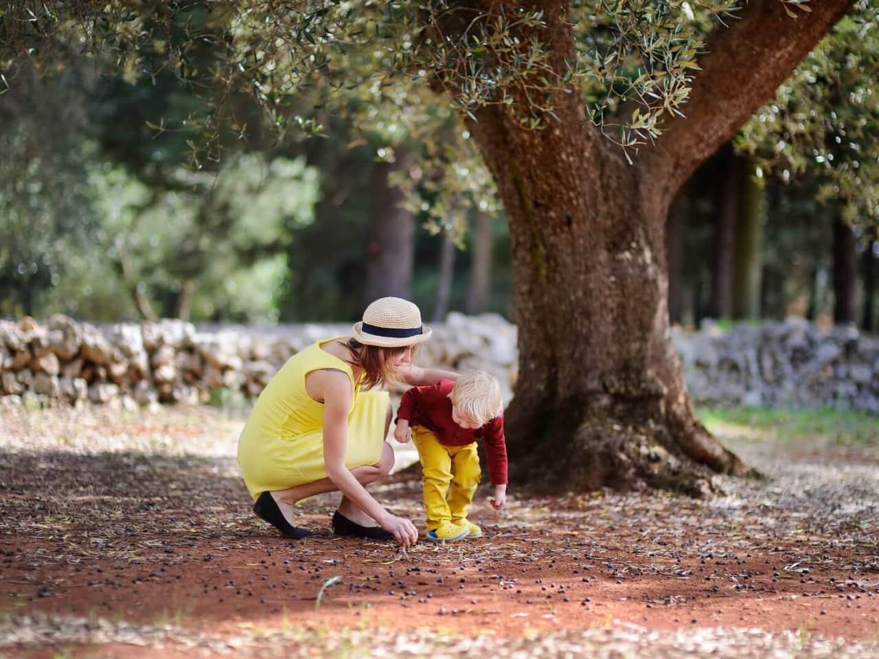 Olive Oil Tasting Tours at Pallada Mill at Akrotiri Chania Crete