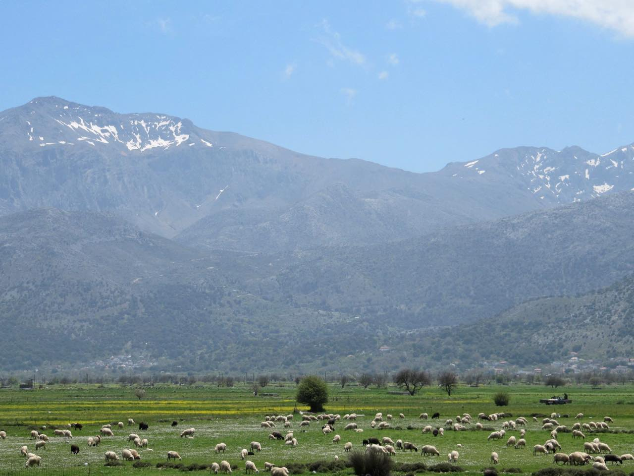 The Tranquil Lasithi Plateau In Spring