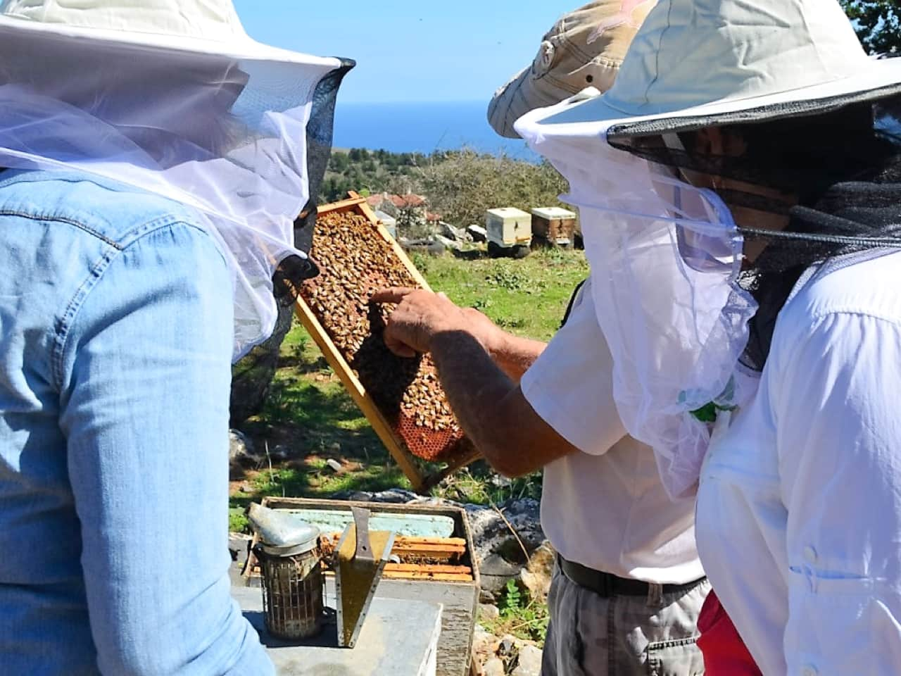 Are You Intrigued By The Mystic World Of Honeybees?