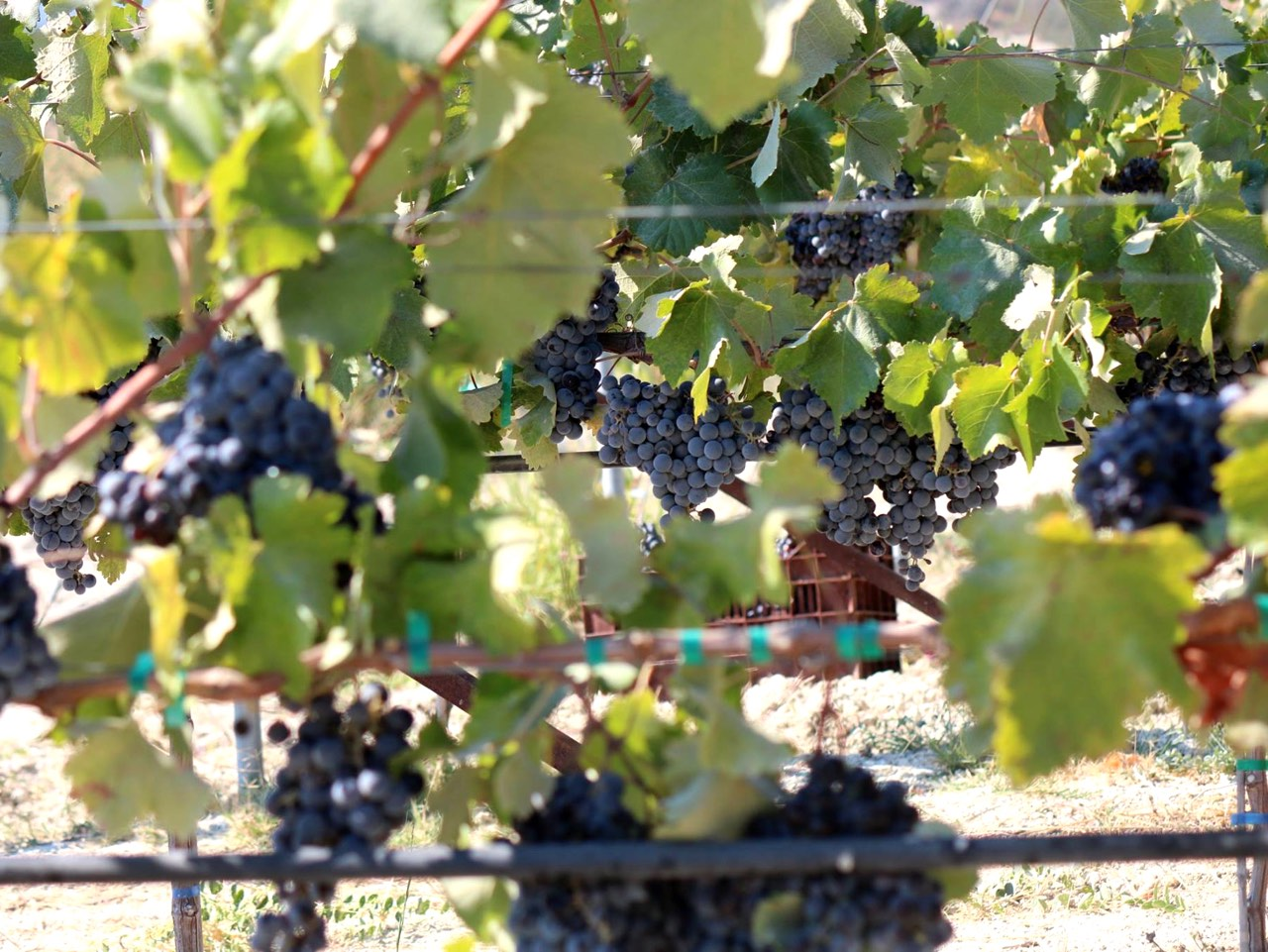 Wineries & Vineyards Across Greece Open Their Doors To Public