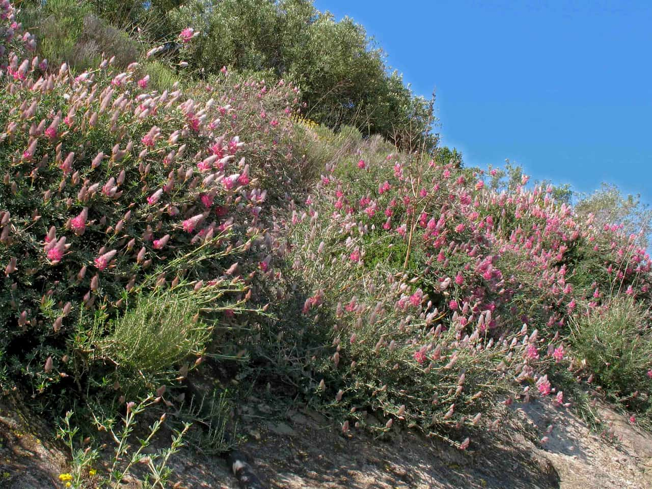 Wildflowers of Crete