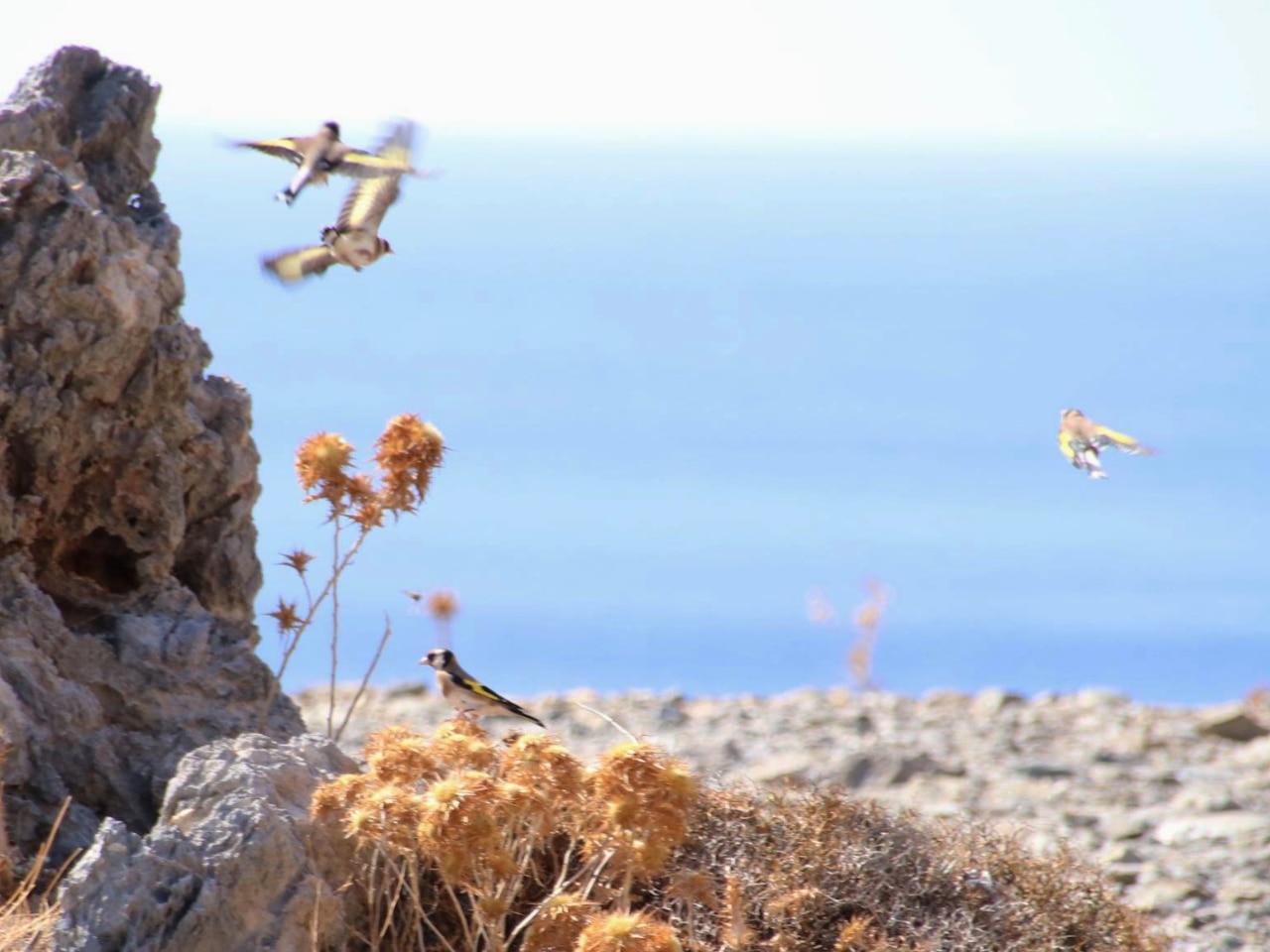 Happy Birds In Plakias Mountains