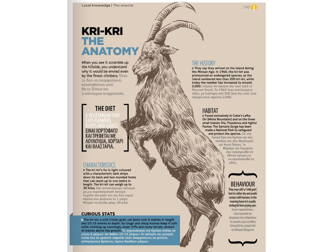 Kri-Kri or Cretan Goat or Agrimi or Cretan Ibex - The Anatomy