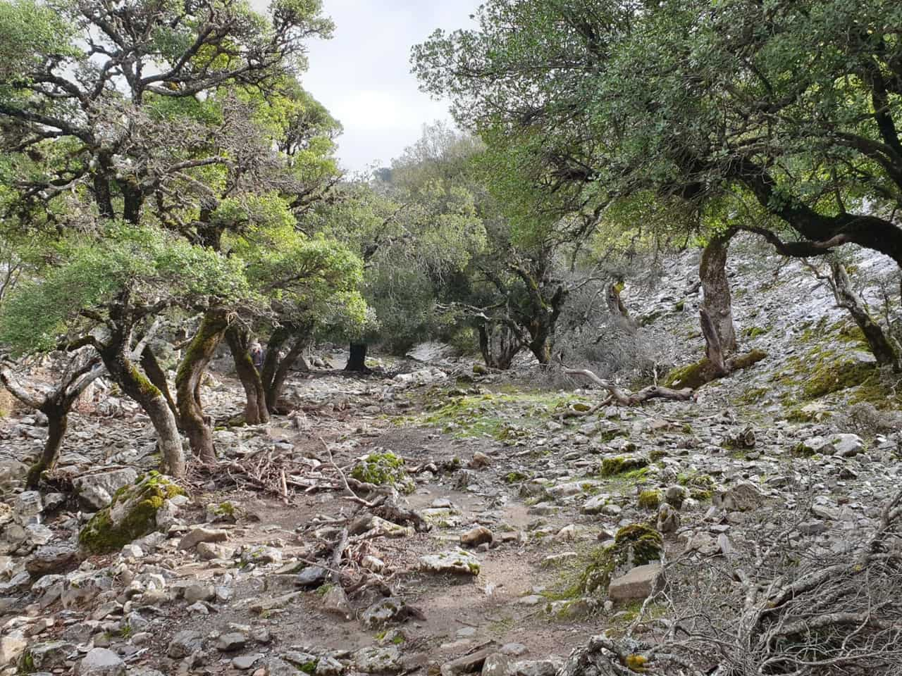 Individual Walks for Orchids in Zaros by Eleonas Country Village, activities heraklion crete, activities rouvas gorge, hiking rouvas gorge