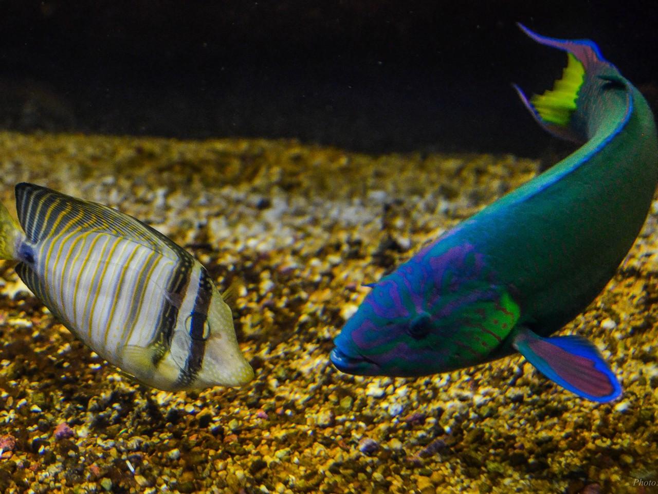 CretAquarium thalassokosmos heraklion Crete, Crete Aquarium gouves heraklion crete, cretaquarium families activities crete, children activities heraklion crete