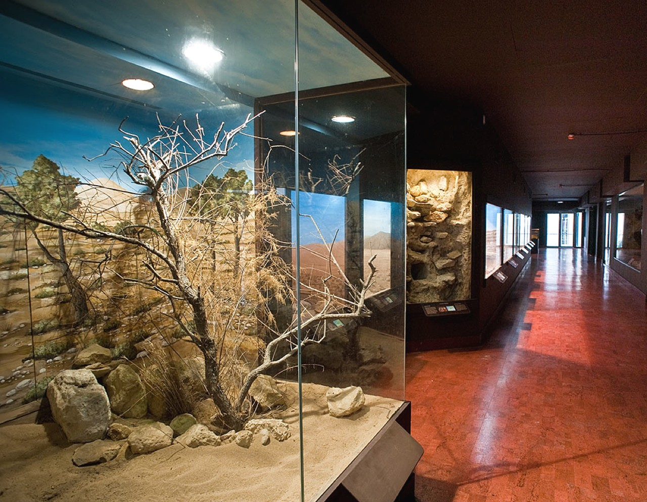 Natural History Museum Heraklion, Explore The Natural Environment Of Crete, things to do heraklion crete, activities heraklion crete, what to do family heraklion, families activities heraklion crete
