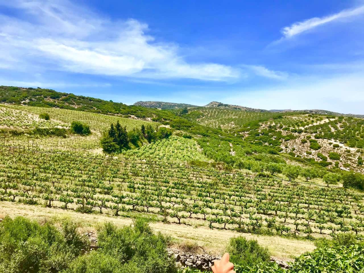 rhous tamiolakis winery heraklion crete, tamiolakis bio wine tasting crete, wine tastings tours crete