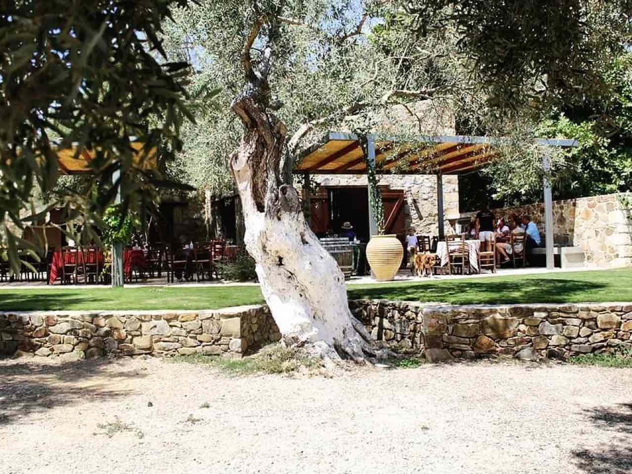 winery tours, wine tasting manousakis winery chania crete, winery visit manousakis winery, bio organic wine chania crete, vineyard tours, bio wine food tasting chania crete, best organic winey crete greece, Organic, boutique winery handcrafted wine, nostos wines chania crete