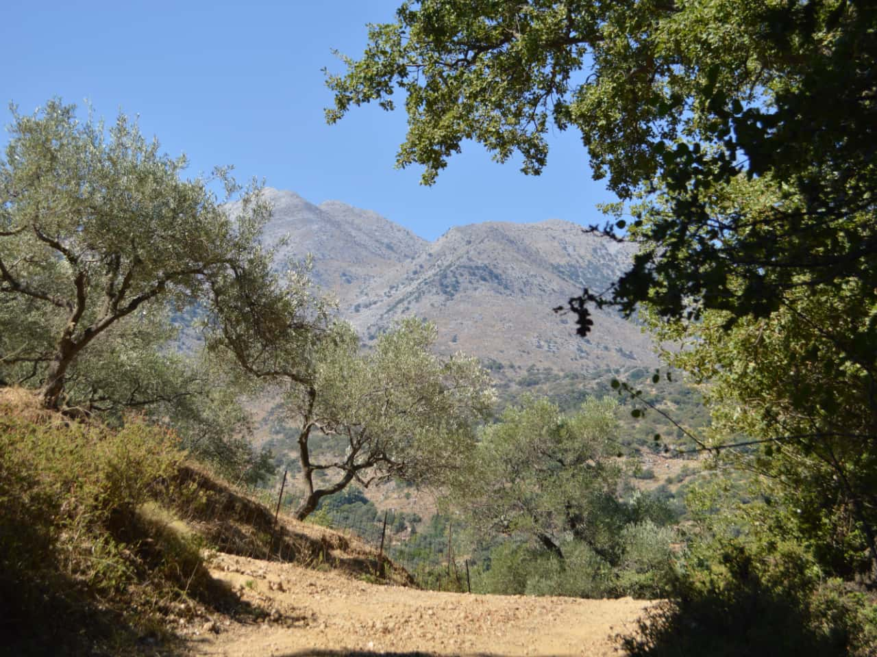 Half-Day Hiking Tour Kournas Village & Azilakas Path, hiking trekking crete activities, oak forest azilakas hiking, best activities chania crete, kournas lake village hiking tour, azilakas forest path crete, best hiking tours chania