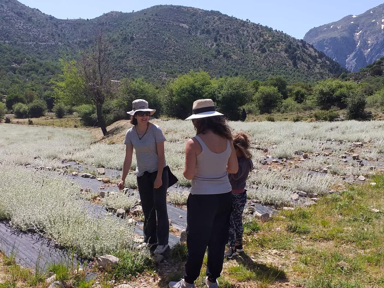 Discovering The Organic Herbs & Flavors Of Crete At Omalos Plateau Of Crete, organic herbs workshop chania crete, organic tea workshop chania crete, best activities chania crete, bio herbs workshop crete, visit an organic farm chania crete