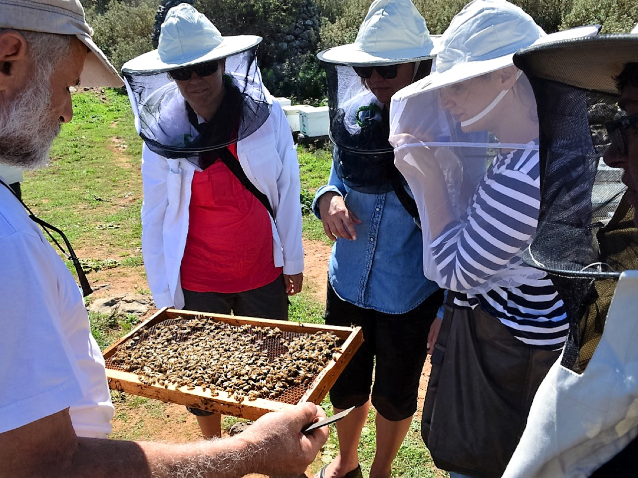 A Local Apiary & Bee-garden Visit, honey making workshop crete, chania honey bee garden visit, chania local apriary honey, learning cretan honey, explore cretan honey, taste cretan thymian honey chania, apiculture of Greece, honey making workshop