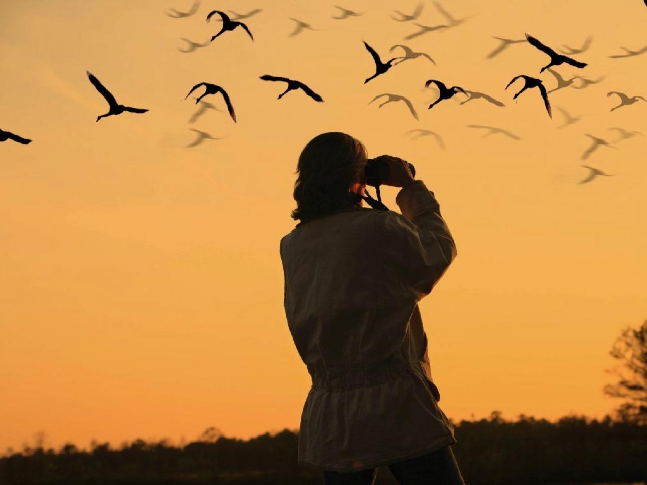 Bird watching holidays crete, bird wathcing chania crete, bird wathcing heraklion crete, bird wathcing rethymno crete, bird wathcing lasithi crete, bird wathcing lake kournas crete, bird wathcing georgioupolis crete, moni preveli birdwatching, faneromeni lake