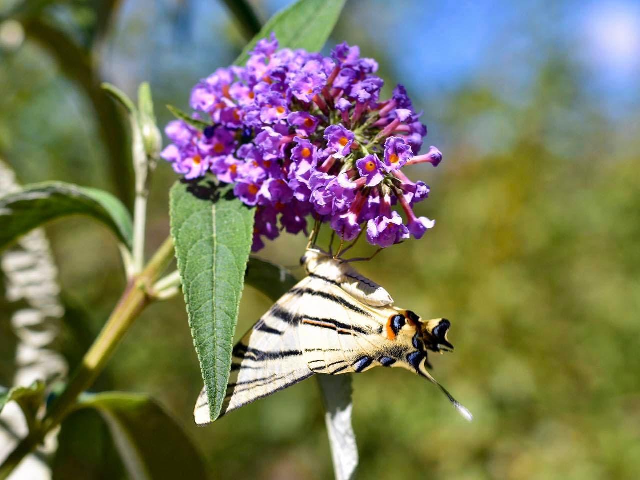 botanical park chania crete, farm animals, endemic herbs, cretan flowers, wild birds, cretan fauna flora, cretan nature