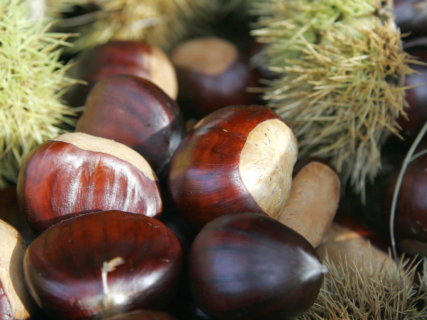 chestnut festival elos chania crete, chestnut festival inachori chania crete, chestnut event celebration chania, chania events, things to do chania, activities chania