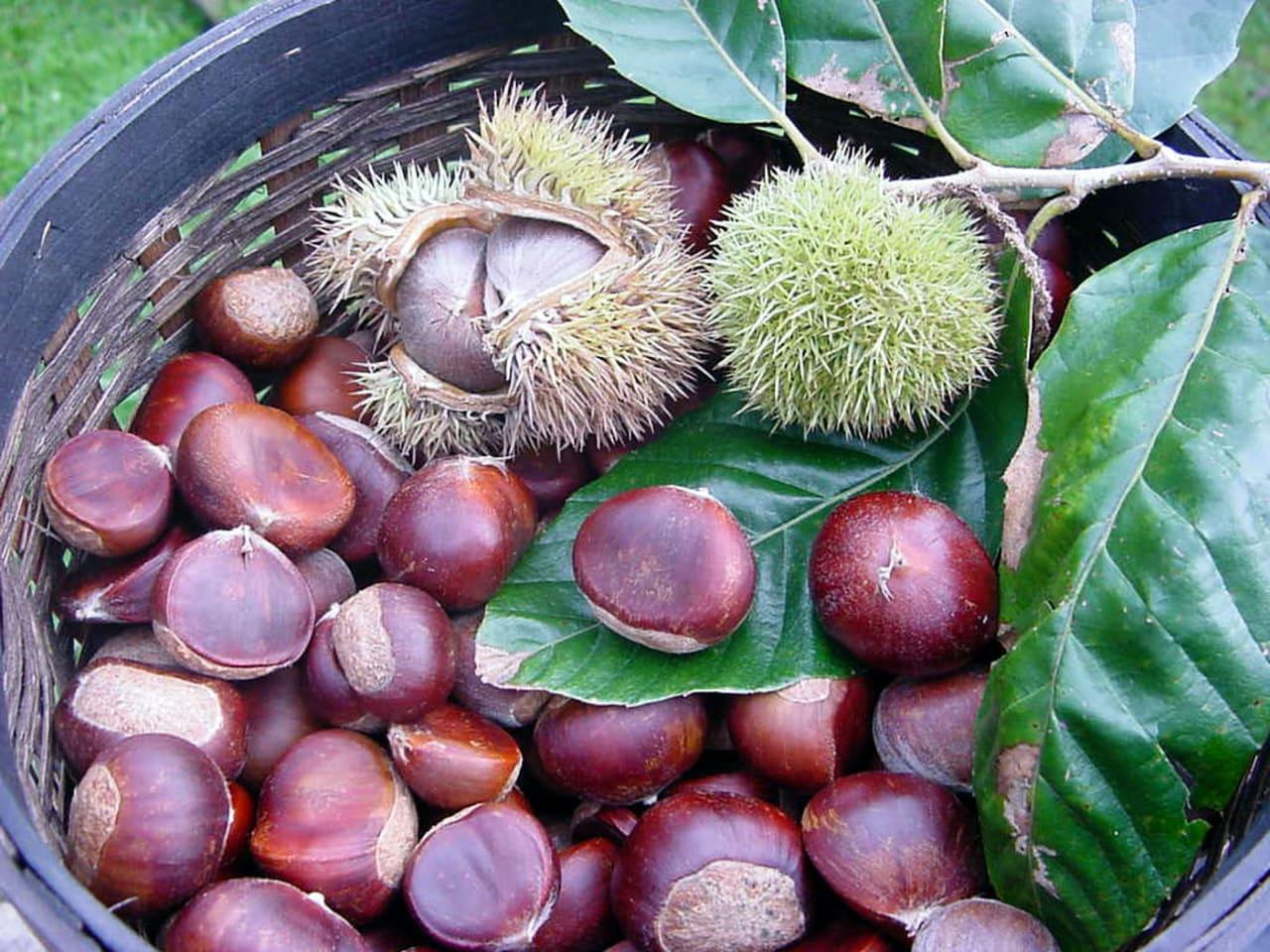 elos village, chestnut festival elos chania crete, activities chania, events chania crete