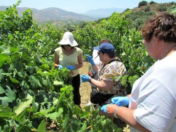 CreteTravel,Central Crete,The Secret Aromas Of Cretan Wines - Heraklion Crete