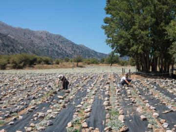 CreteTravel,West Crete,Discovering The Organic Herbs & Flavors Of Crete At Omalos Plateau Of Crete