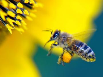 CreteTravel,West Crete,Beekeeping and Honey Making - Discover The Mystic World Of Honeybees