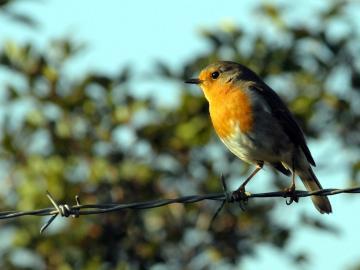 CreteTravel,West Crete,Bird Watching in Crete