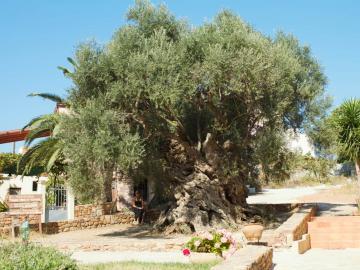 CreteTravel,West Crete,Olive Tree Museum of Vouves