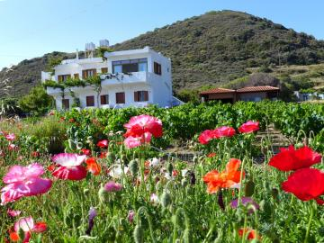 CreteTravel,East Crete,Mochlos Mare Apartments