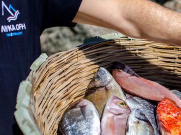 fresh fishes, lefka ori taverna restaurant, sfakia village, chora sfakion